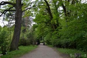 10  parc dendrologic simeria hoinariromani