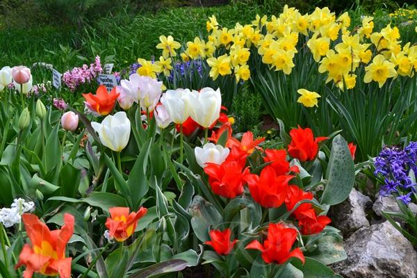 flori de primanavara